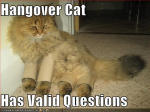 funny-pictures-hangover-cat-cardboard-paper-rolls